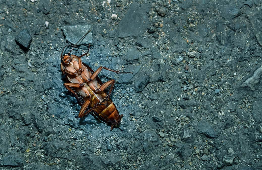 dead cockroach on a cement floor, right after pest control service carried out