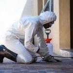 pied piper liquid termite treatment