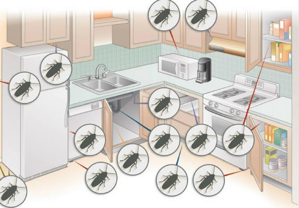 Pest control service Pest control company Termite control service Termite pest control Bed bugs elimination service Bed bugs treatment Bed bugs removal service Cockroach elimination service Disinfection misting service Mosquito fogging service