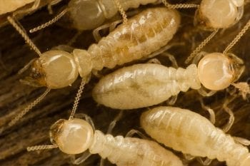 group of termites crawling together