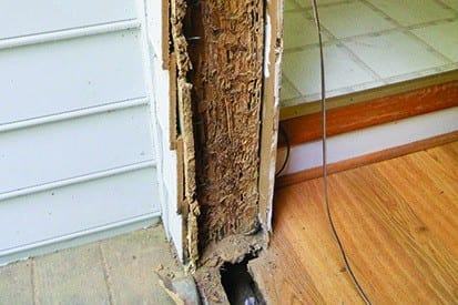 Termite damage on door frame
