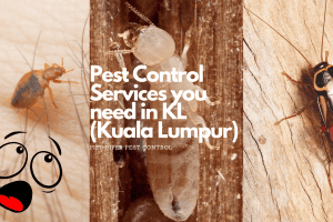 pest control service u need in kl